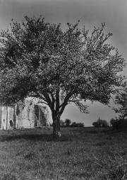 Un arbre dans le jardin de l'abbaye, à côté de la Galerie Est.